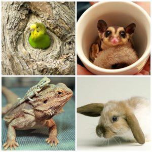 Exotic_Pets