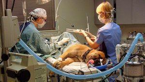 photo-veterinary-surgery